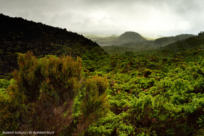 forest_azores_DSC3779_Web